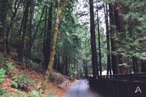 Jouer à Spiderman: zipline dans les Redwoods