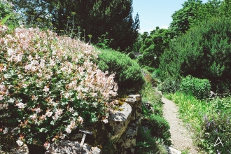 Jardin_botanique_Lausanne_11