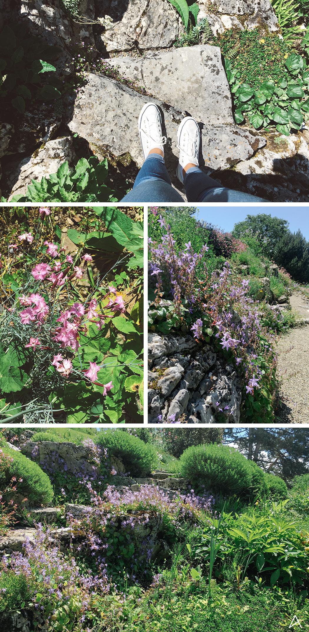 Jardin_botanique_Lausanne_17