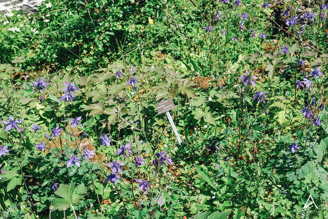 Jardin_botanique_Lausanne_4
