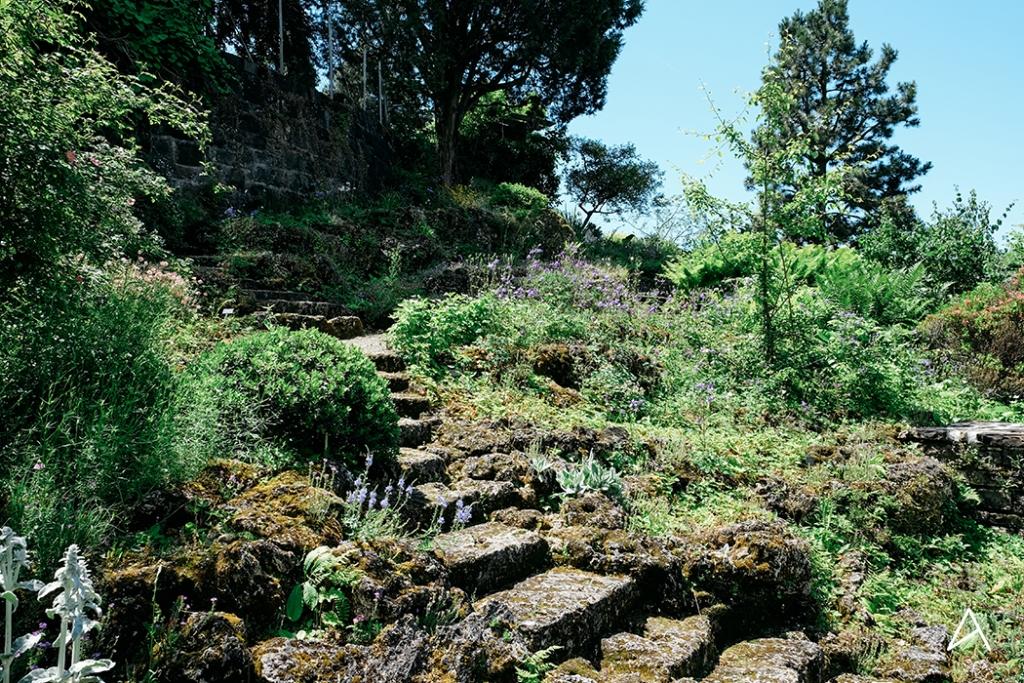 Jardin_botanique_Lausanne_5