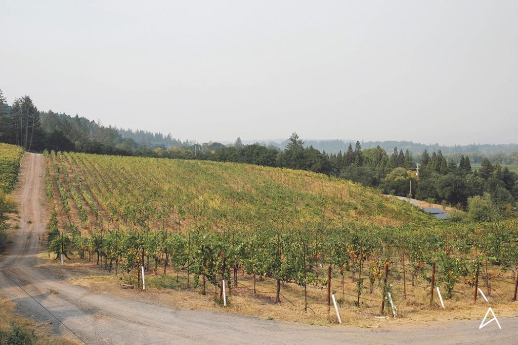 Sonoma_Valley_3