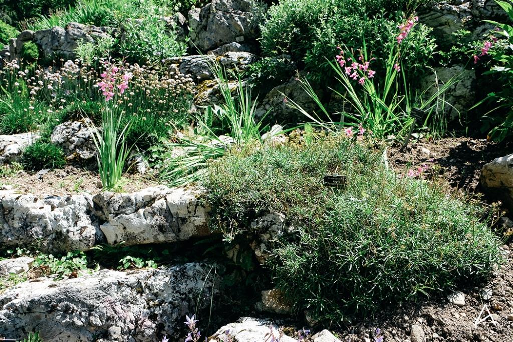 Jardin_botanique_Lausanne_12