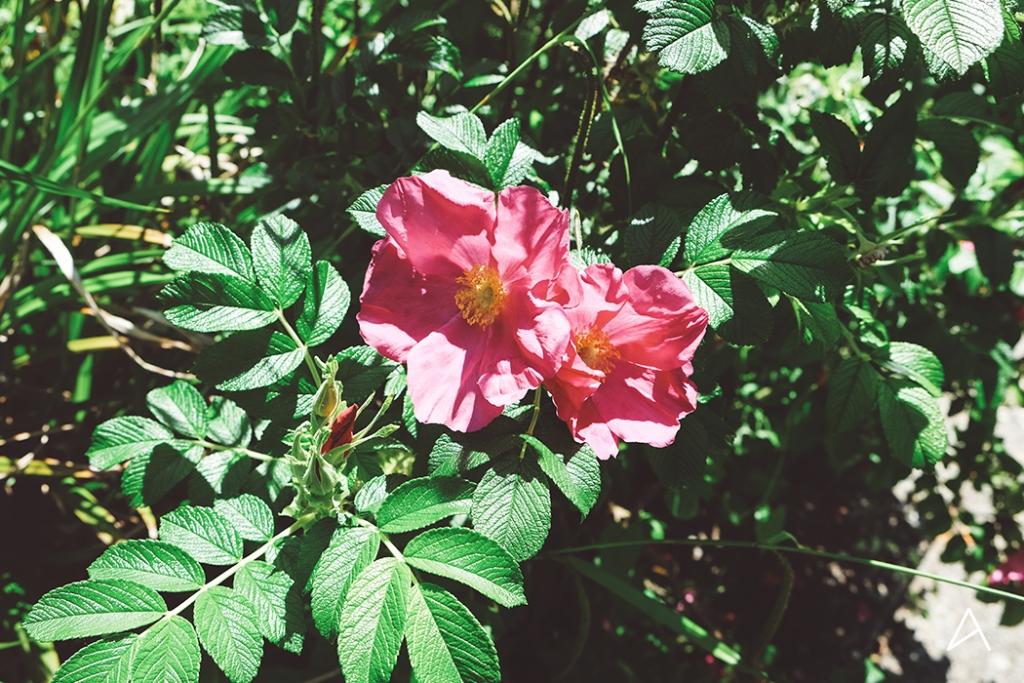 Jardin_botanique_Lausanne_6