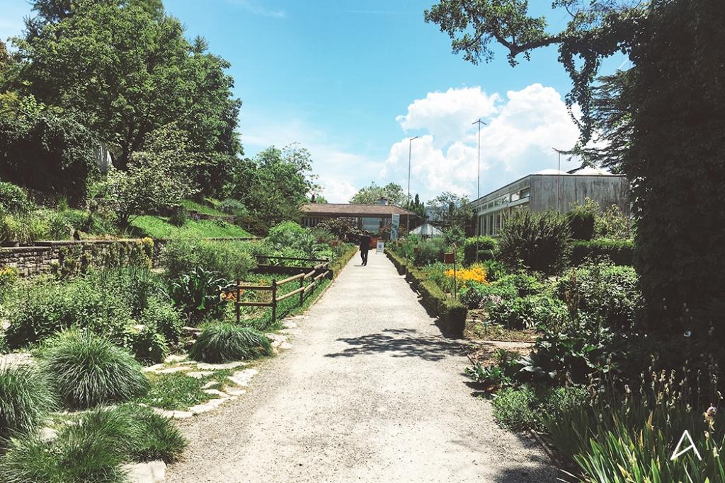 Jardin_botanique_Lausanne_7