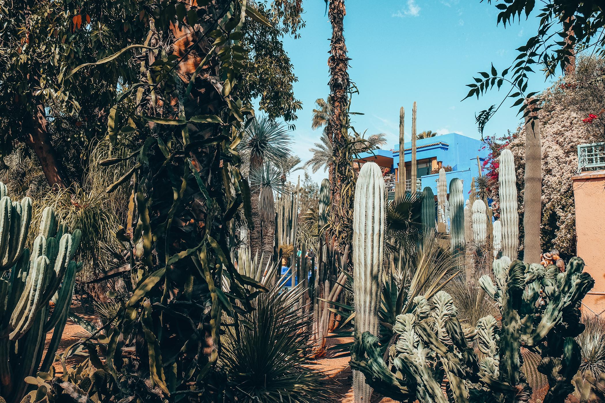 Le jardin majorelle l 39 incontournable de marrakech for Jardin marrakech