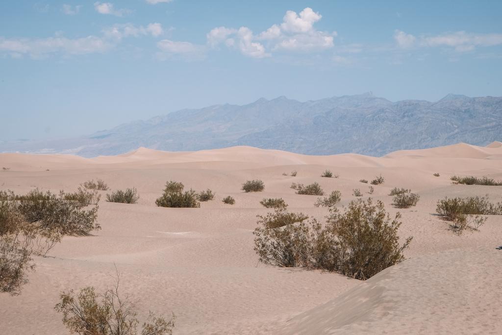 Des dunes de sable en plein milieu de la vallée de la mort, c'est Mesquite Dunes