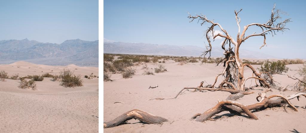 Un paysage vraiment désertique