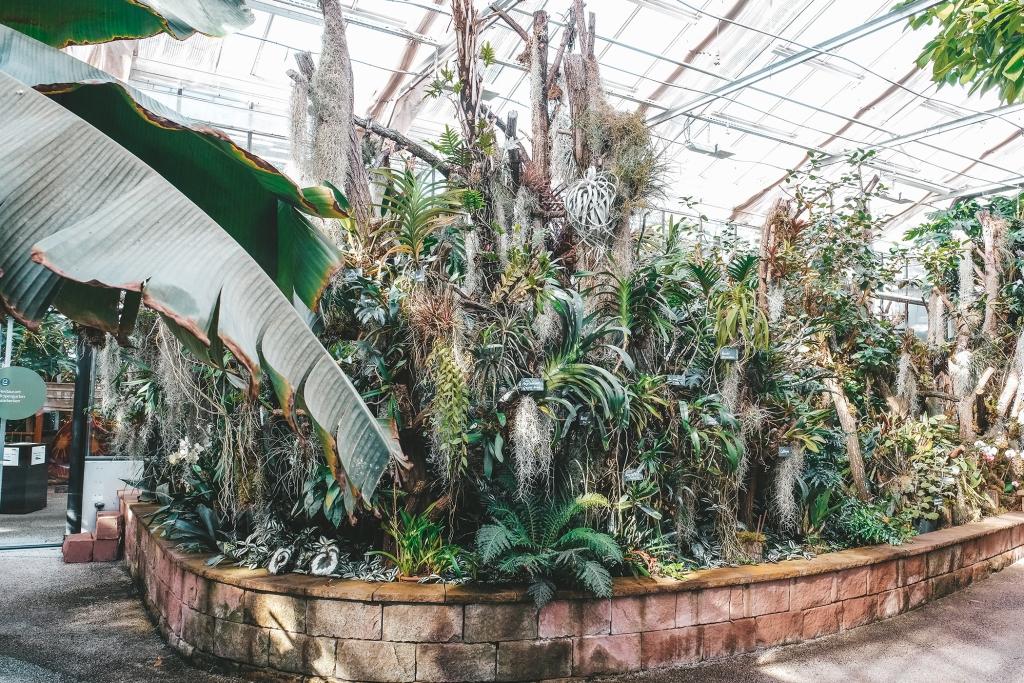 Les plantes exotiques sont présentes partout