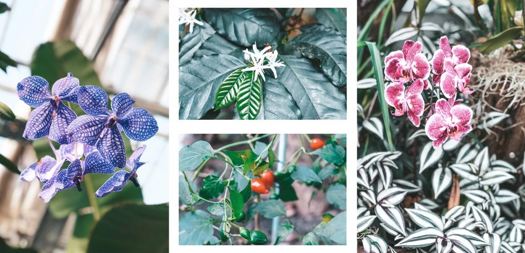 Des très belles plantes et fleurs