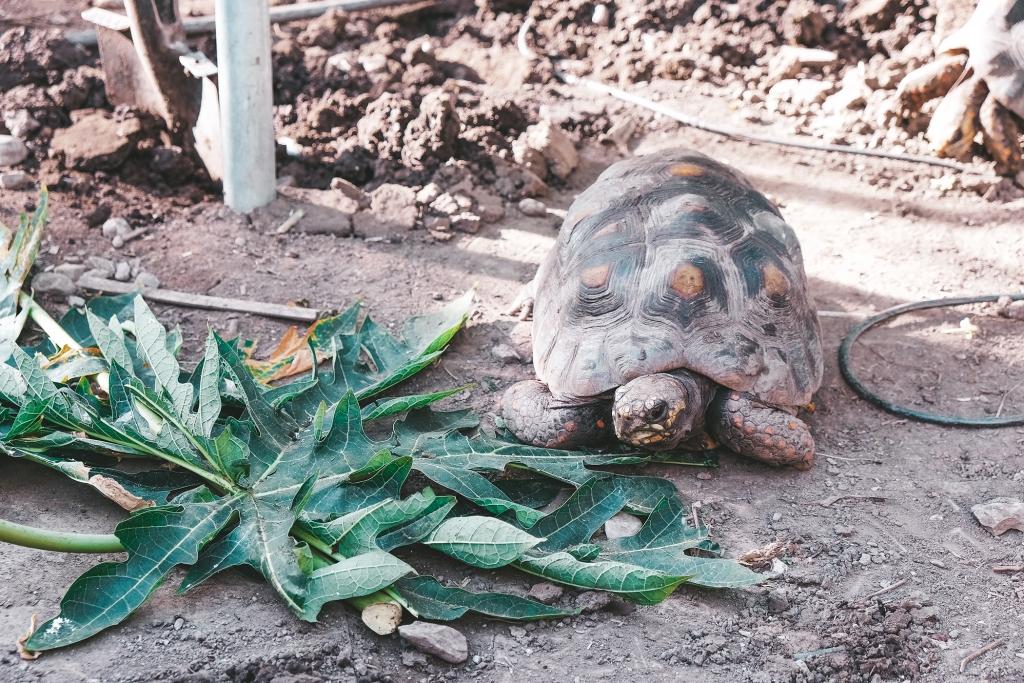 Des tortues sont présentes a la Tropenhaus de Frutigen